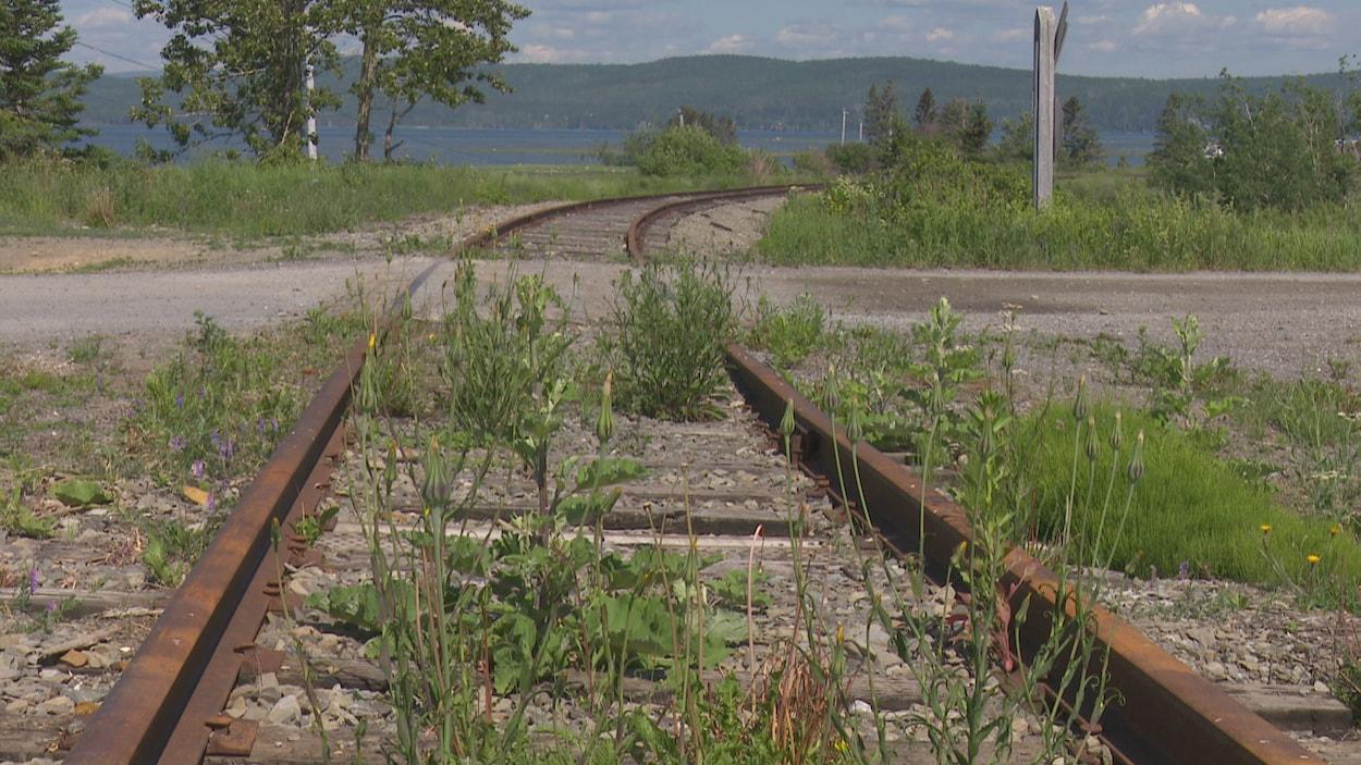 Une portion du chemin de fer avec des mauvaises herbes .