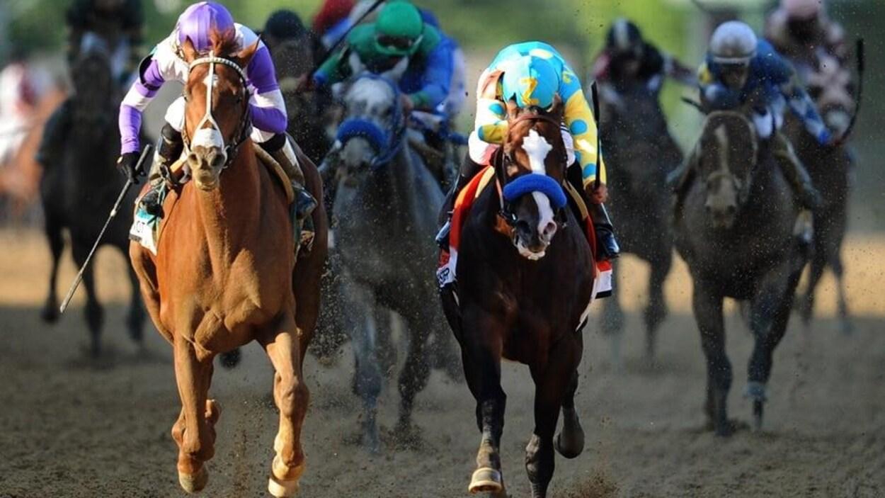 Des chevaux en pleine course à l'hippodrome.