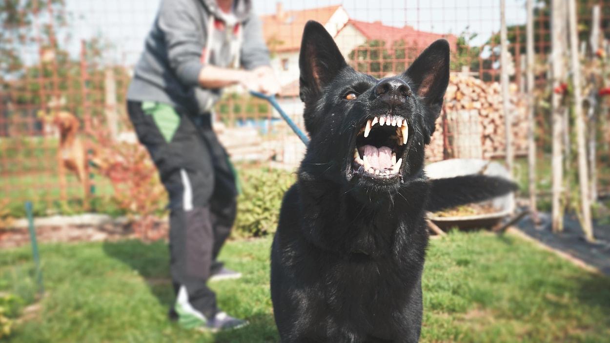 Un homme retient un chien agressif par sa laisse.