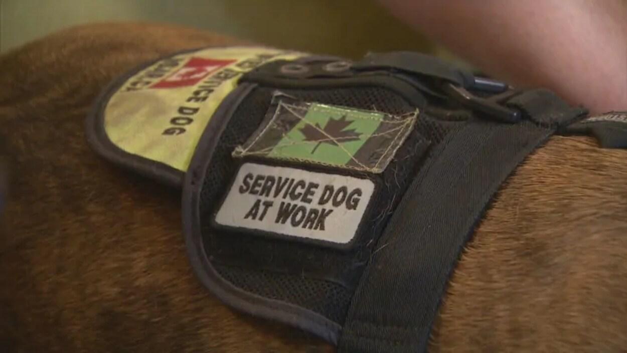Gros plan sur une veste portée par un chien et qui dit qu'il est un chien d'assistance en service.