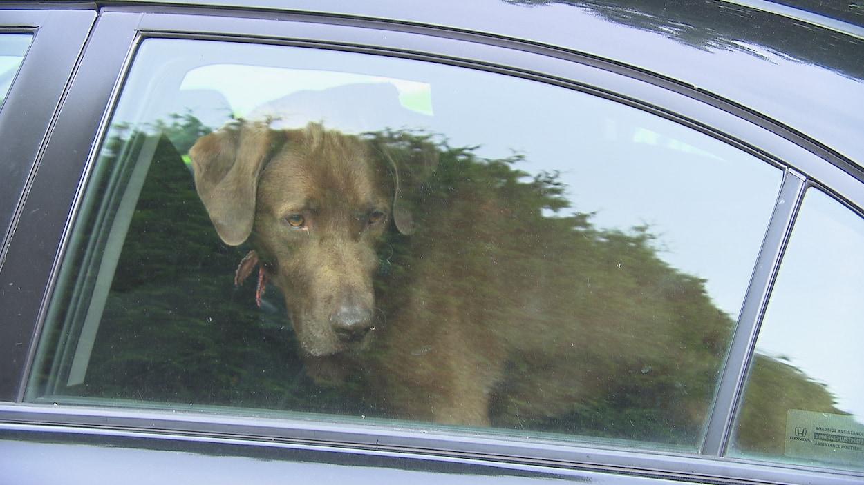 un homme de l 39 p mis l 39 amende pour avoir laiss des chiens dans sa voiture par 30 c. Black Bedroom Furniture Sets. Home Design Ideas
