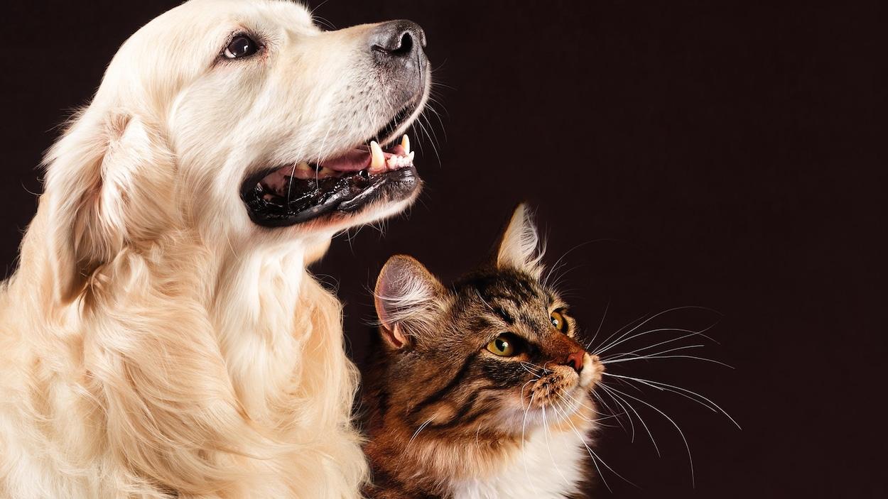 Les chiens seraient plus intelligents que les chats, selon une étude.
