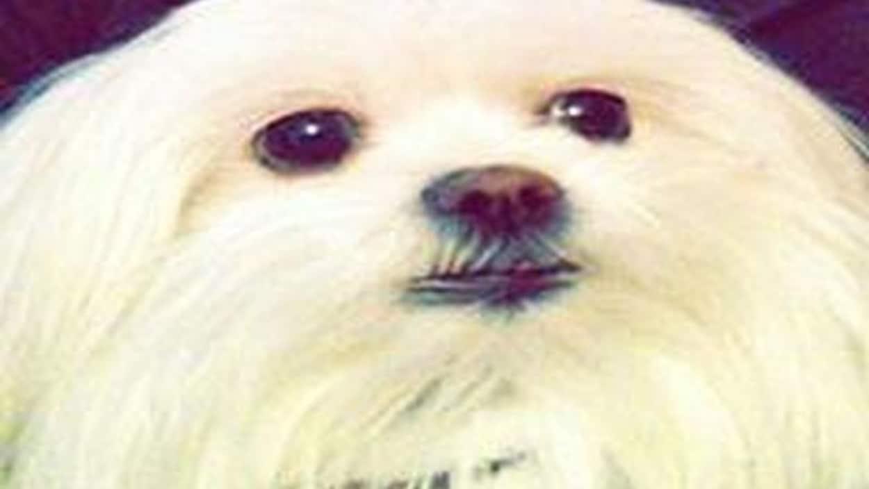 Photo du chien volé