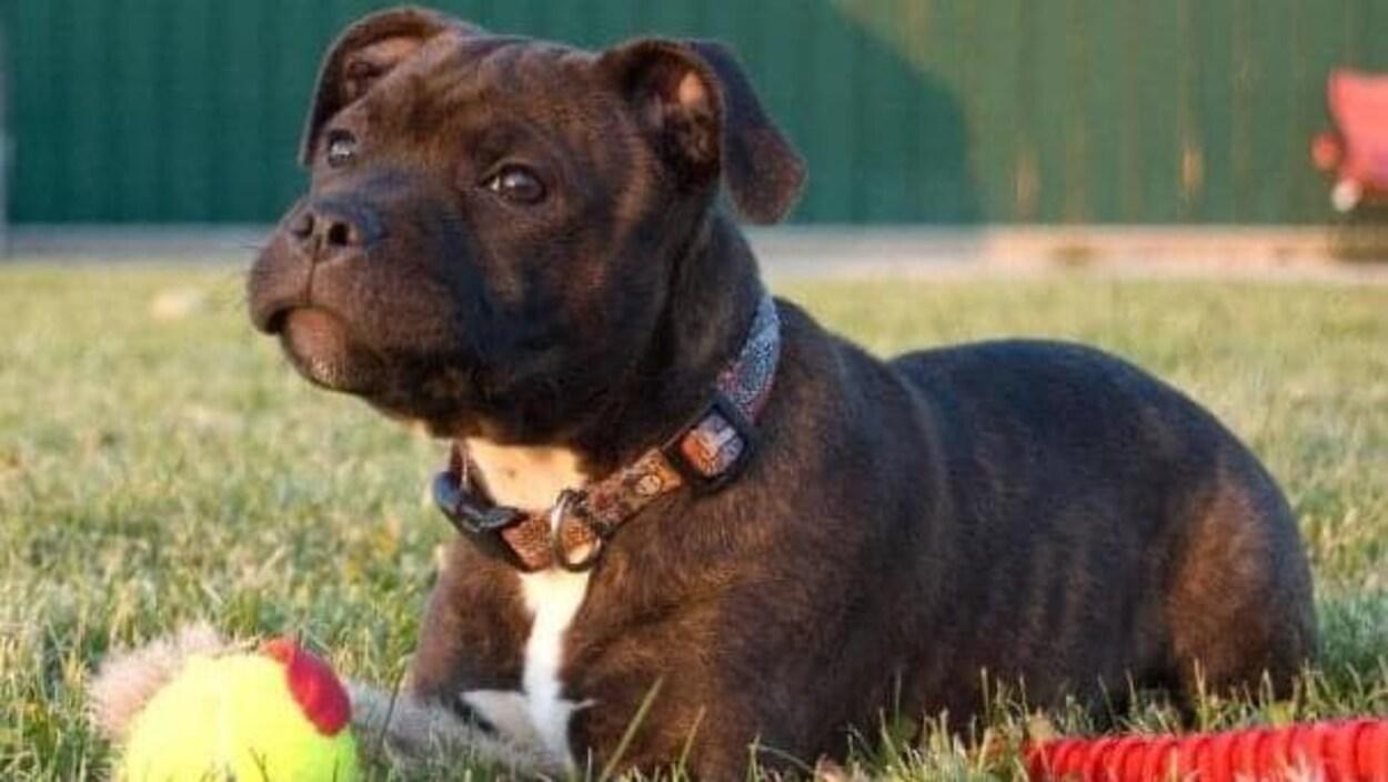 Un chien assis dans l'herbe avec ses jouets.