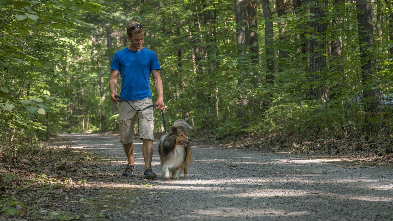 Un chien promené en laisse au parc d'Oka