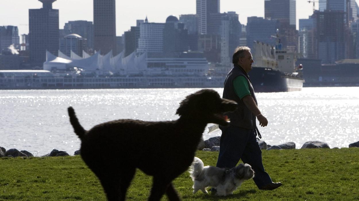 Un homme et deux chiens marchent dans un parc avec au loin, le centre-ville de Vancouver.