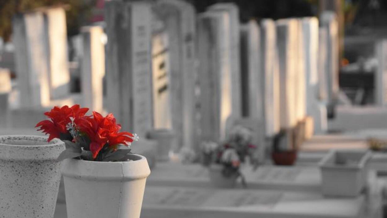 Des fleurs sur des pierres tombales dans un cimetière.