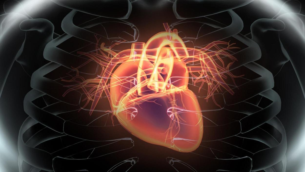 Représentation artistique d'un coeur humain.