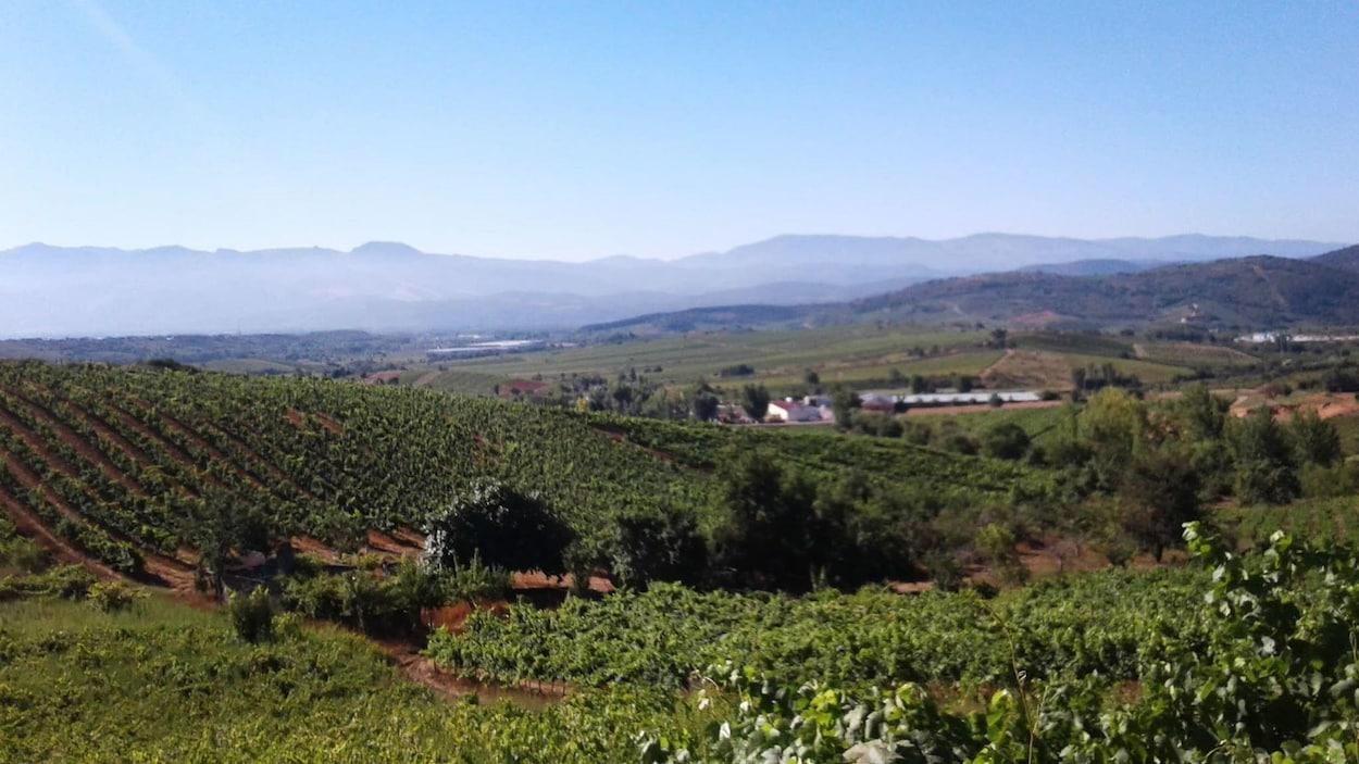 Paysage vallonné du chemin de Compostalle, avec au premier plan des vignes sur une colline et des montagnes à l'arrière-plan, sous un ciel bleu.