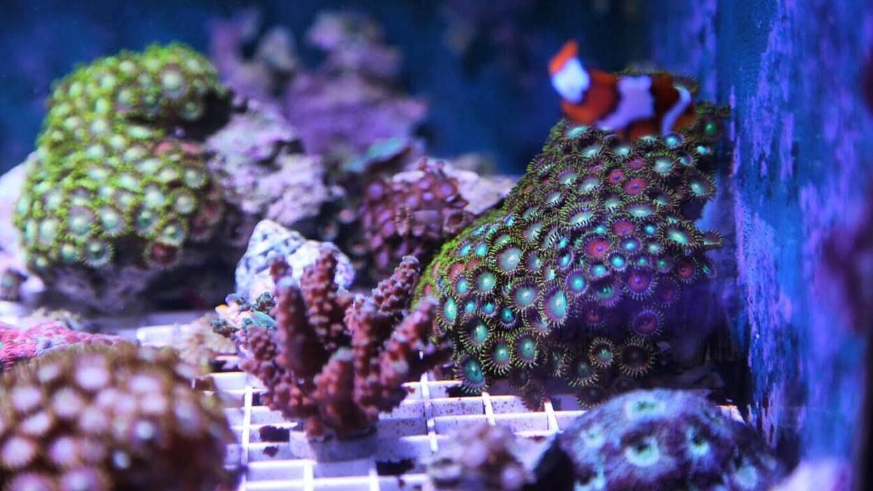 Des coraux et un poisson.