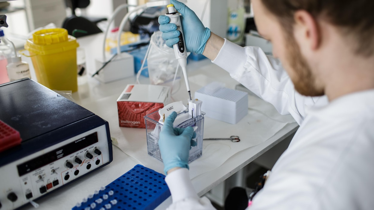 Un chercheur dans un laboratoire effectue des tests pour développer un vaccin contre la COVID-19.