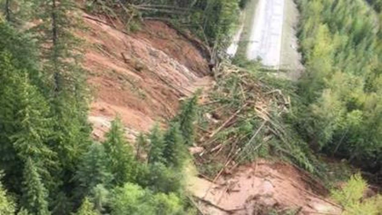 Une immense coulée de boue et beaucoup de troncs d'arbres jonchent une route qui traverse une forêt.
