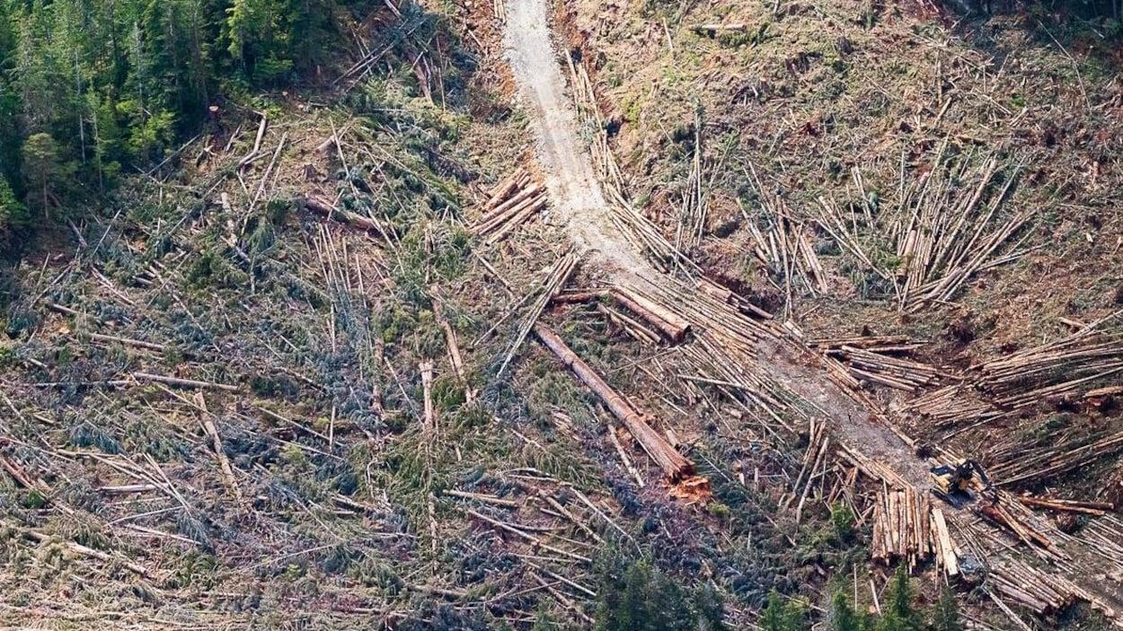 Vue aérienne d'arbres coupés.