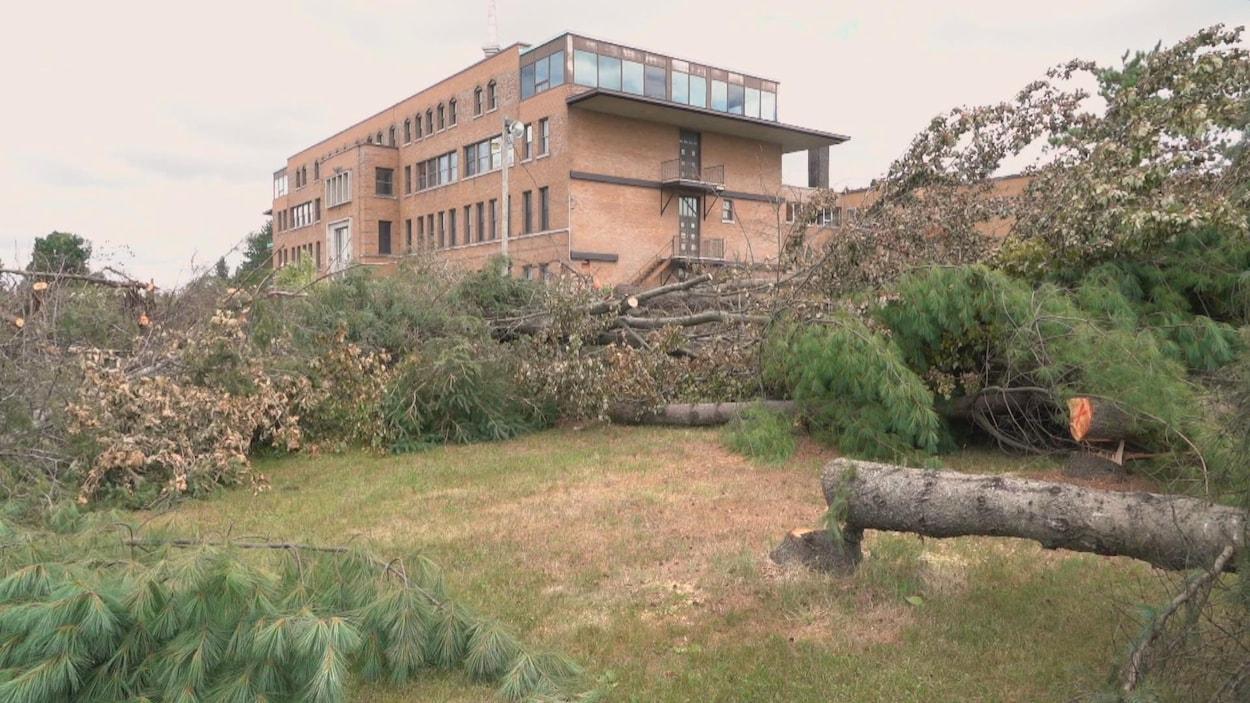 Des arbres abattus devant l'ancienne école des Arbrisseaux, à Compton.