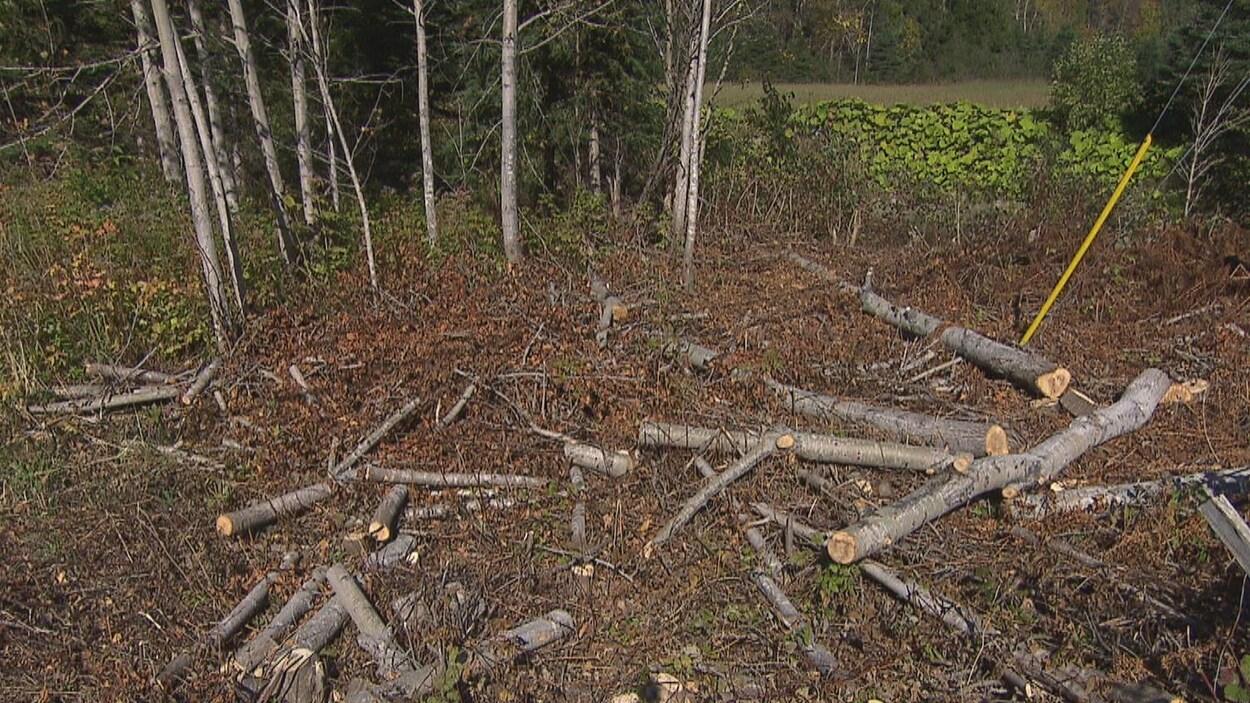 Des troncs parsèment le sol près d'une ligne électrique.