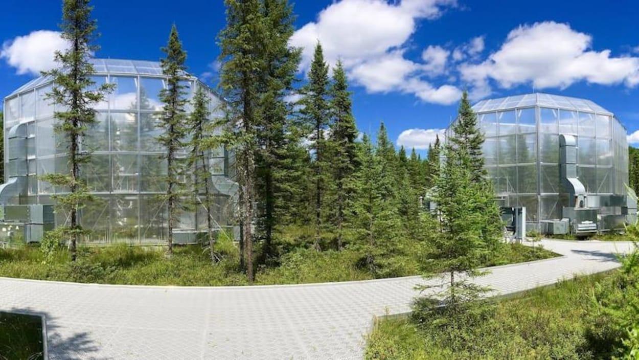 Deux grandes coupoles de verre contenant des parties de forêt boréale, entourées d'arbres.