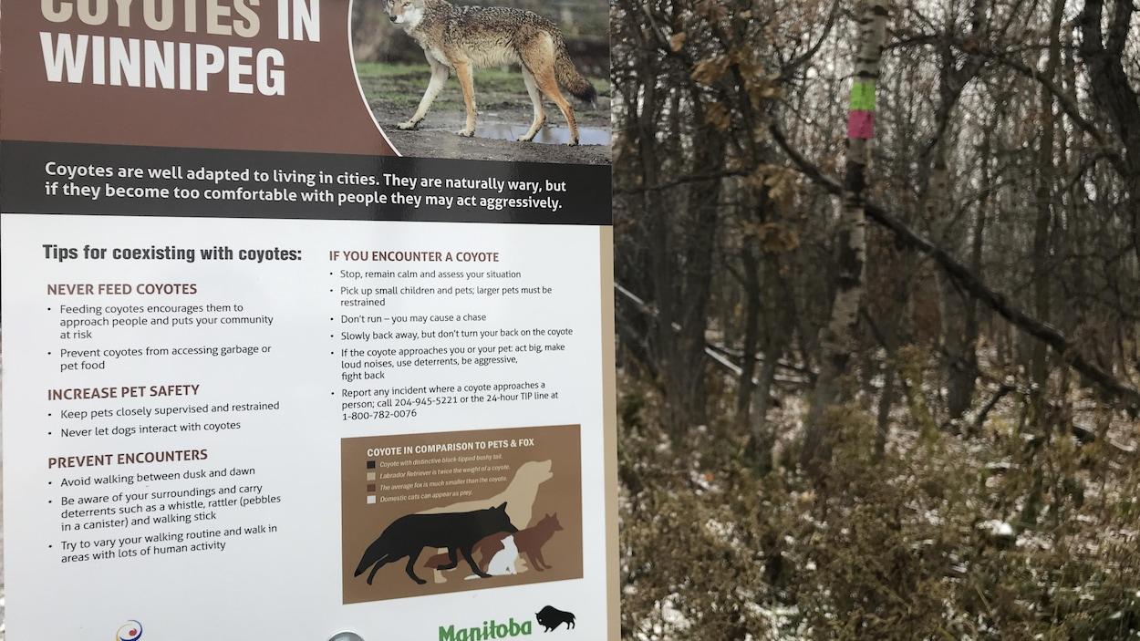 Un panneau indique la présence de coyotes et quoi faire pour éviter de les rencontrer.