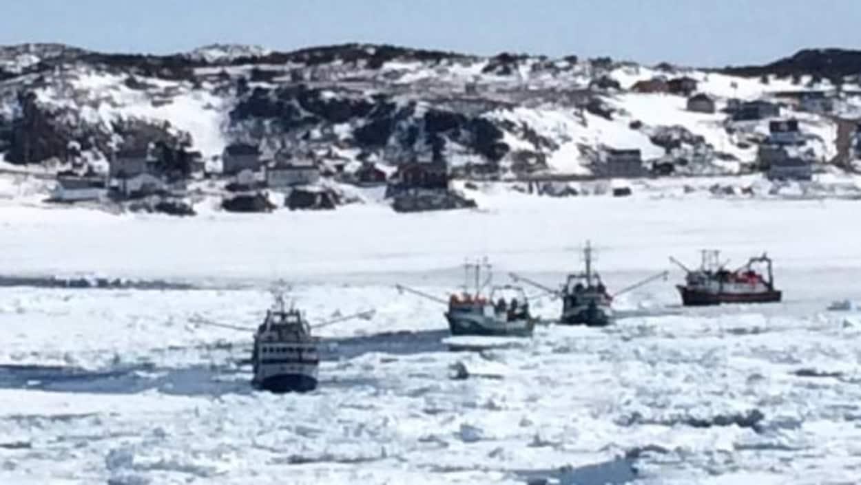 Les crabiers n'arrivent pas à passer au travers de la glace.
