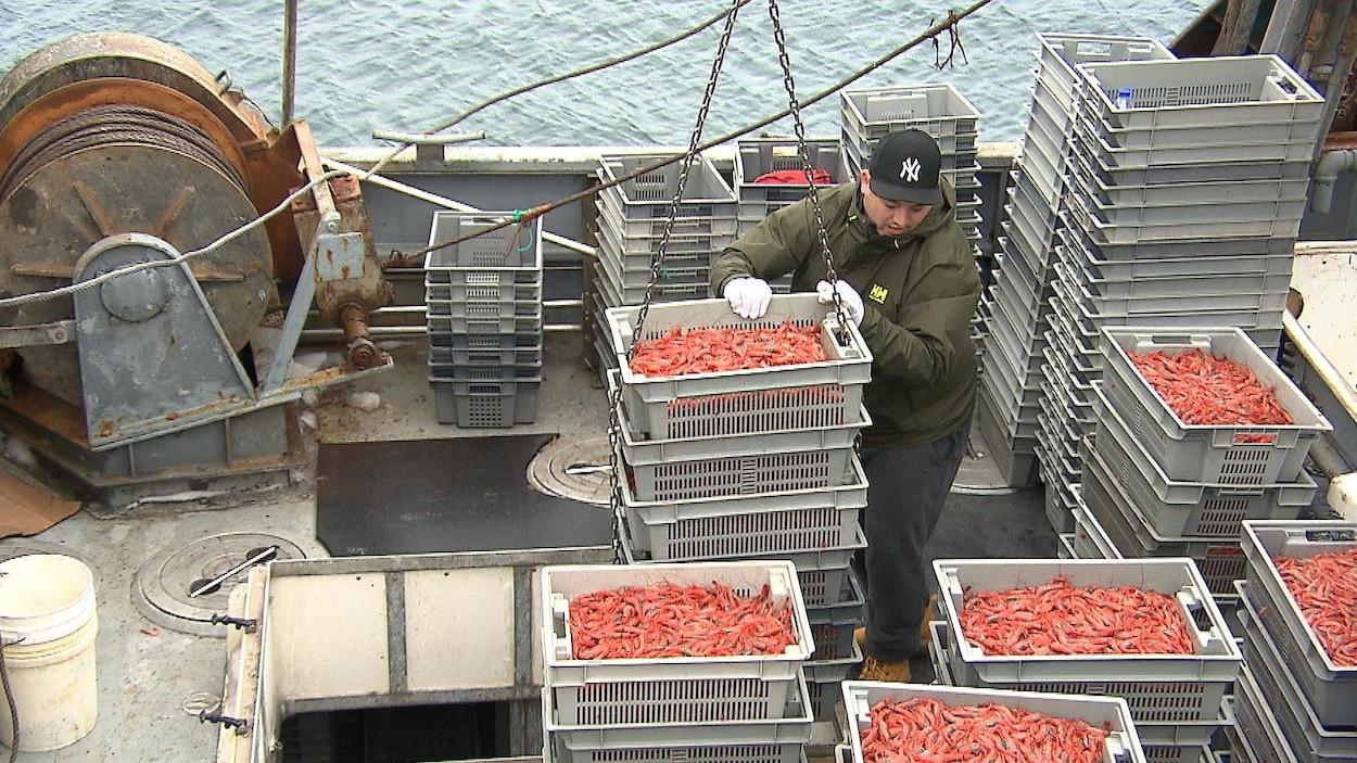 Des contenants remplis de crevettes crues sortent d'un bateau de pêche au quai de Sept-Îles.