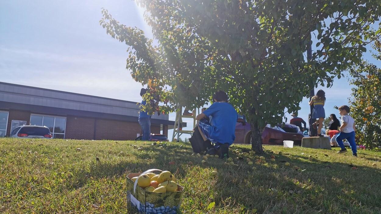 Des enfants ramassent des poires.