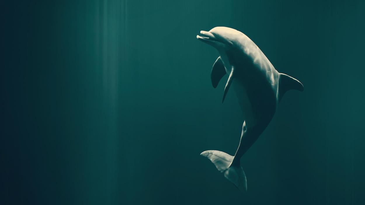 On voit un dauphin, dans l'eau