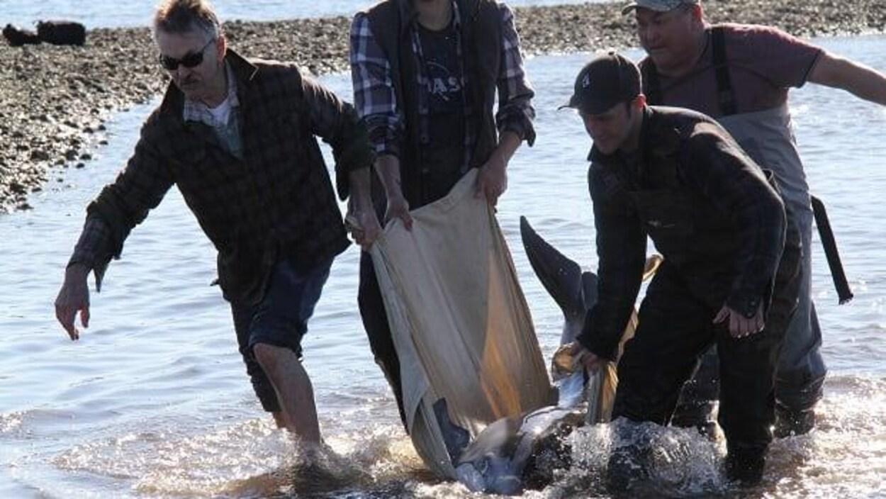 Des gens soulèvent un dauphin coincé dans un piège  à poissons ancestral.