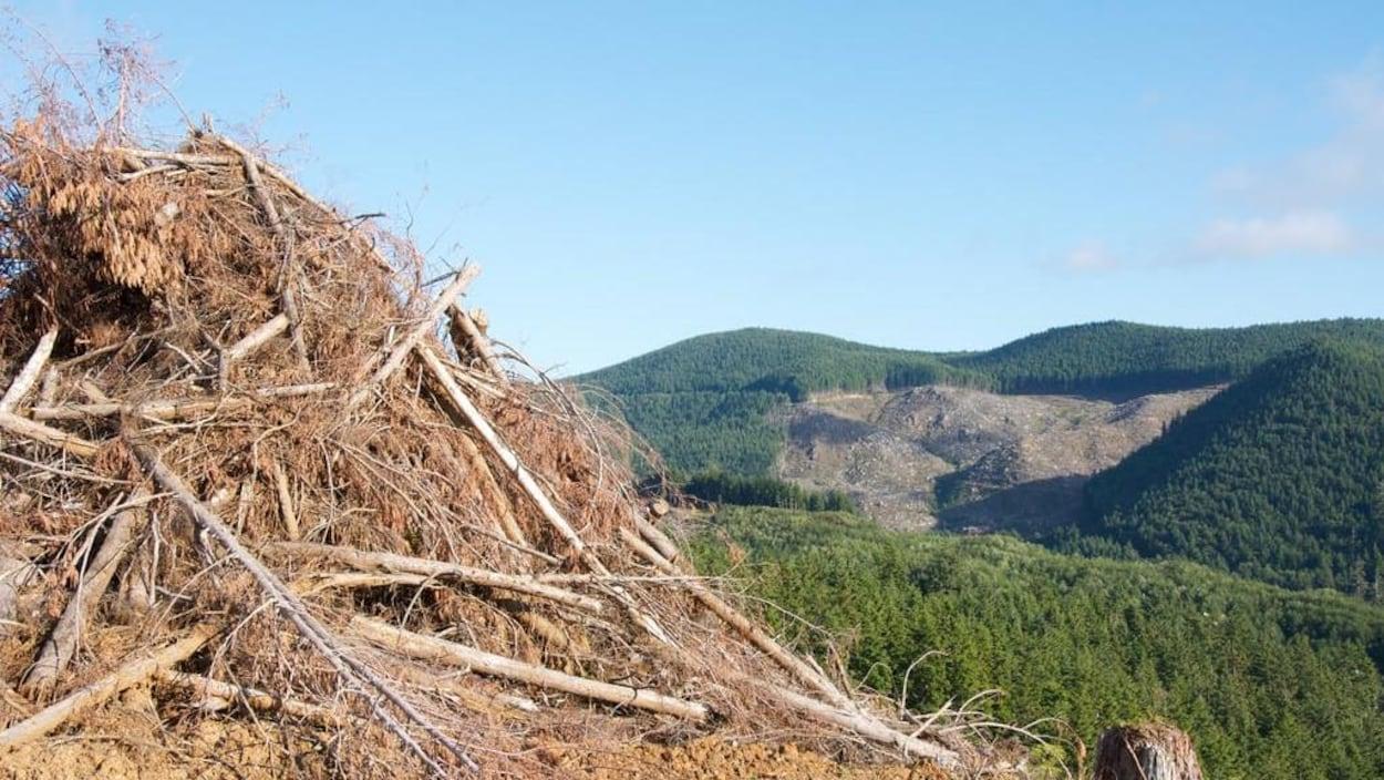 Des débris de bois sont empilés près d'une forêt.