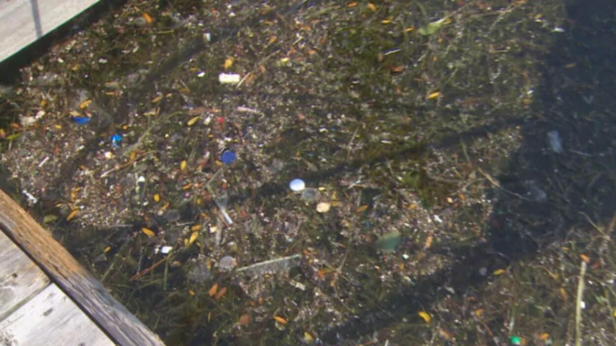 Des condoms, des serviettes hygiéniques et des applicateurs de tampon se retrouvent dans le lac Ontario, à la suite des inondations de mardi.