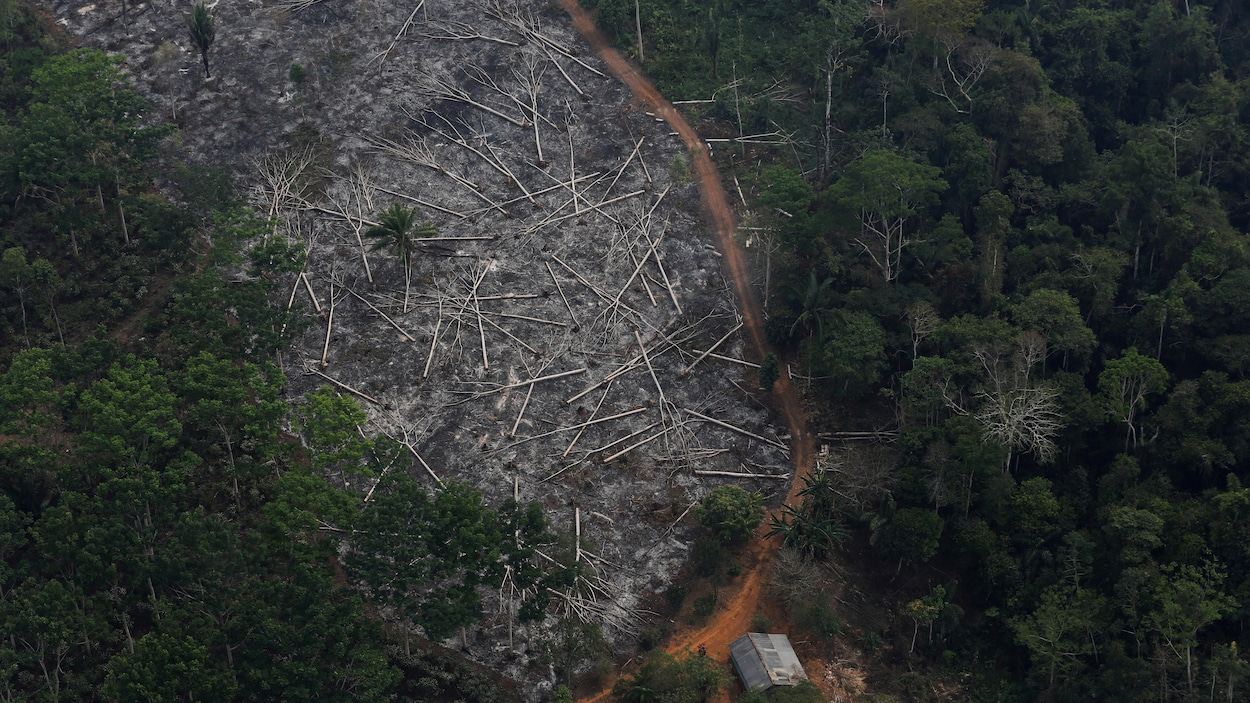 Une parcelle déboisée de l'Amazonie dans la forêt nationale de Bom Futuro, à Porto Velho, dans l'État de Rondoni.