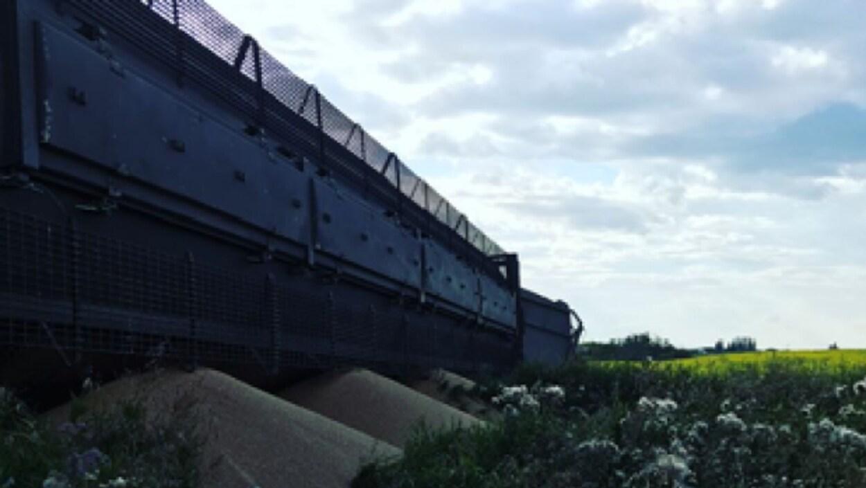 Wagons du Canadien National qui ont quitté les rails près de Melfort en Saskatchewan