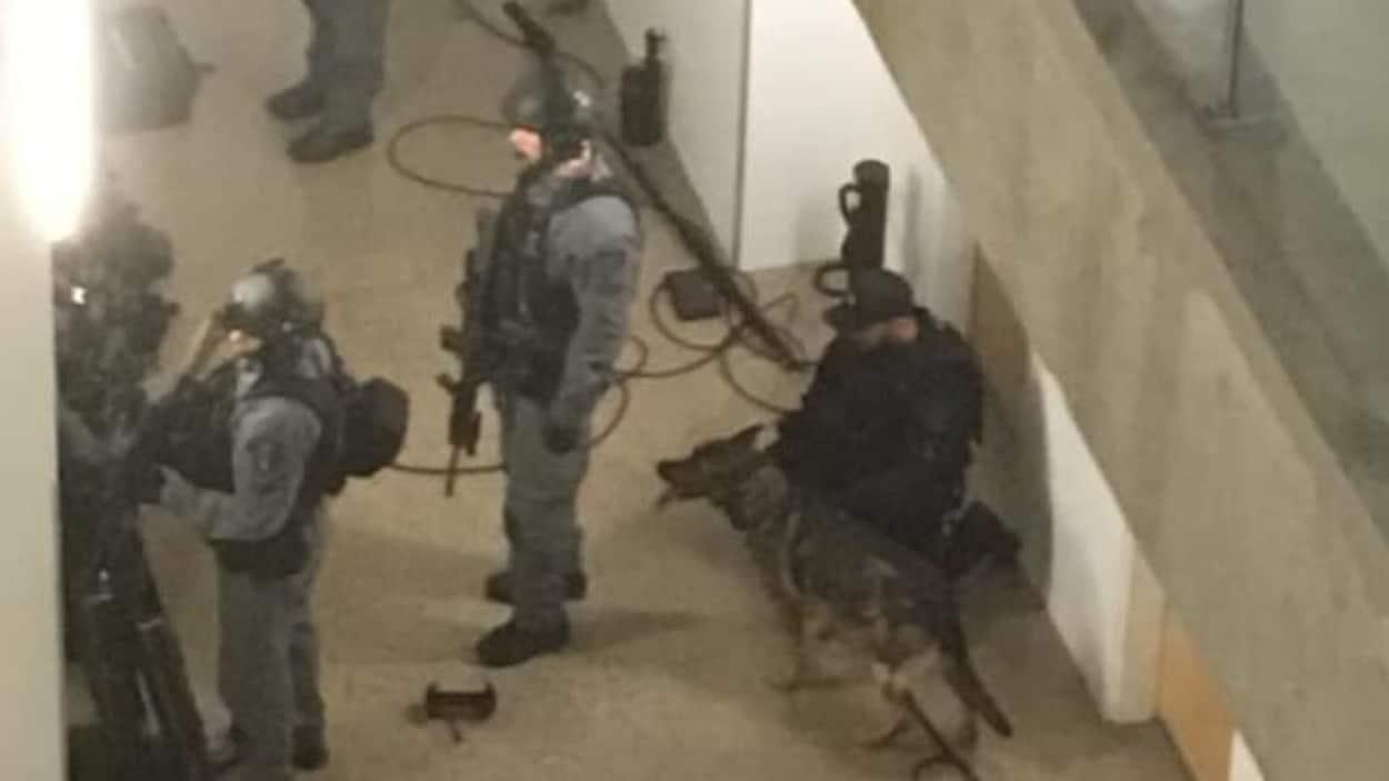 Des policiers, lourdement armés et accompagnés d'un chien renifleur, procèdent à une descente dans un immeuble à Saskatoon.