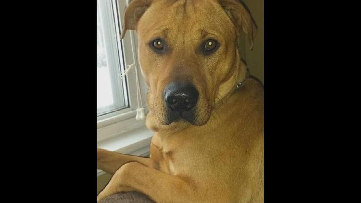 Une photo du chien nommé Diesel.