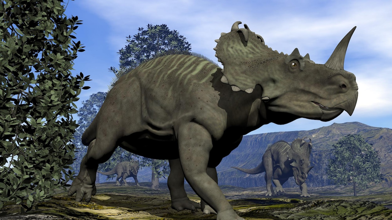 Représentation artistique d'un Centrosaurus, un dinosaure du groupe des cératopsiens.