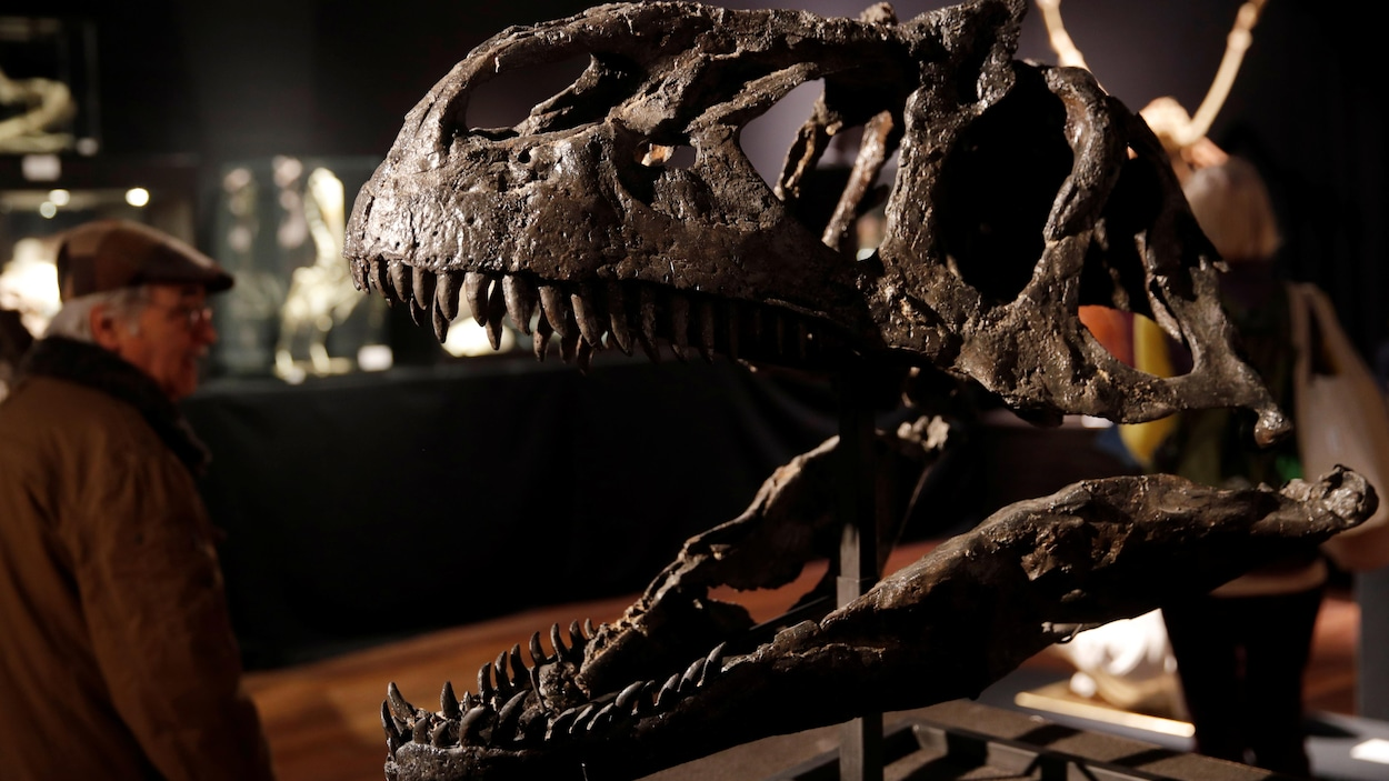 Un squelette de dinosaures