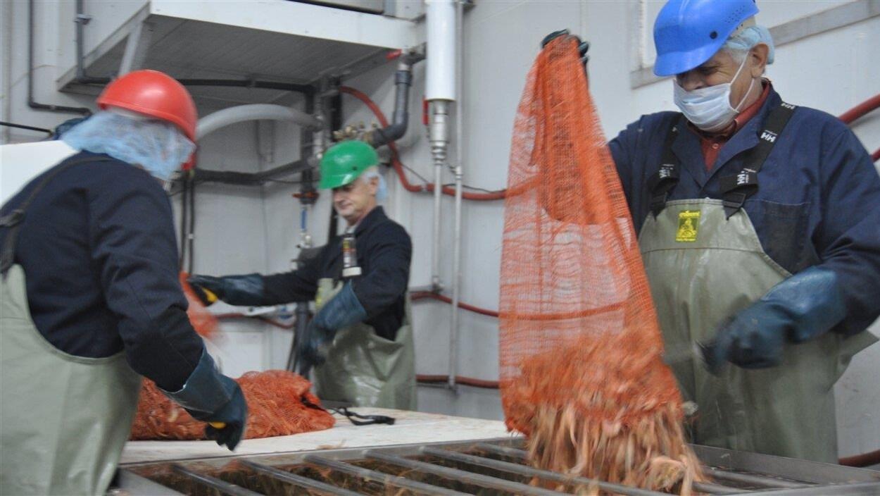 Les crevettes arrivent à l'usine des Pêcheries Marinard.