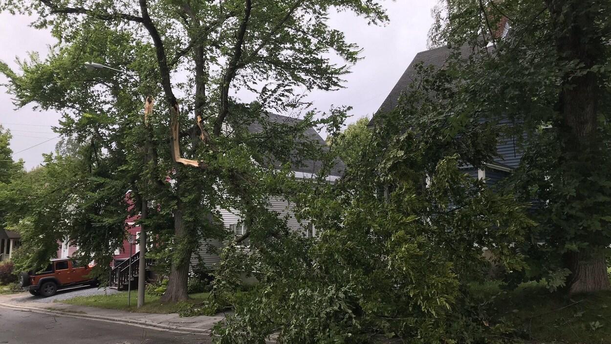 Un arbre de tombé dans la rue.
