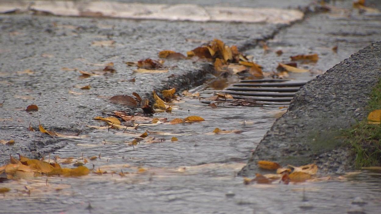 Des feuilles, emportées par la pluie, commencent à s'amasser autour d'un drain.