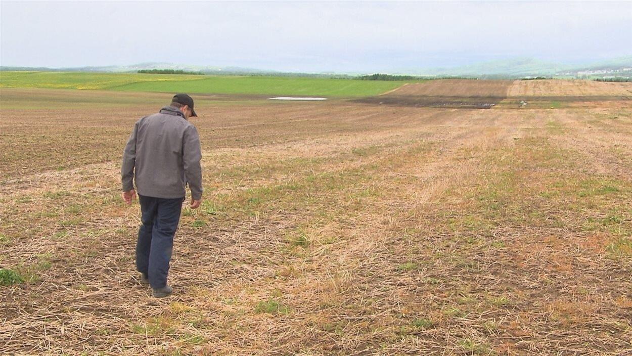 Selon une étude de la Coop fédérée, plus de la moitié des agriculteurs souffrent d'un niveau élevé de détresse psychologique.