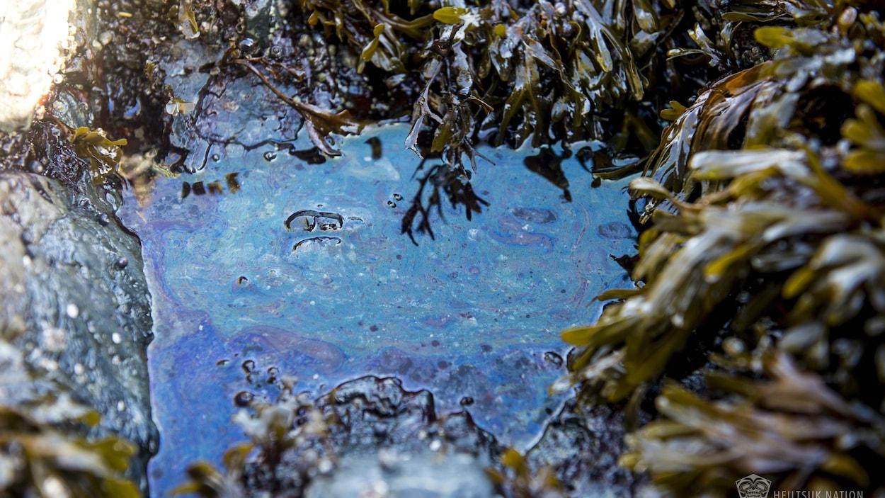 Des traces de diesel dans une mare entourée d'algues et de roches