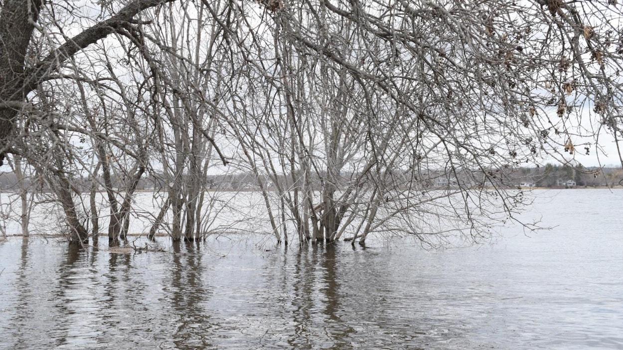 Les eaux gagnent un secteur boisé près du lit du fleuve.