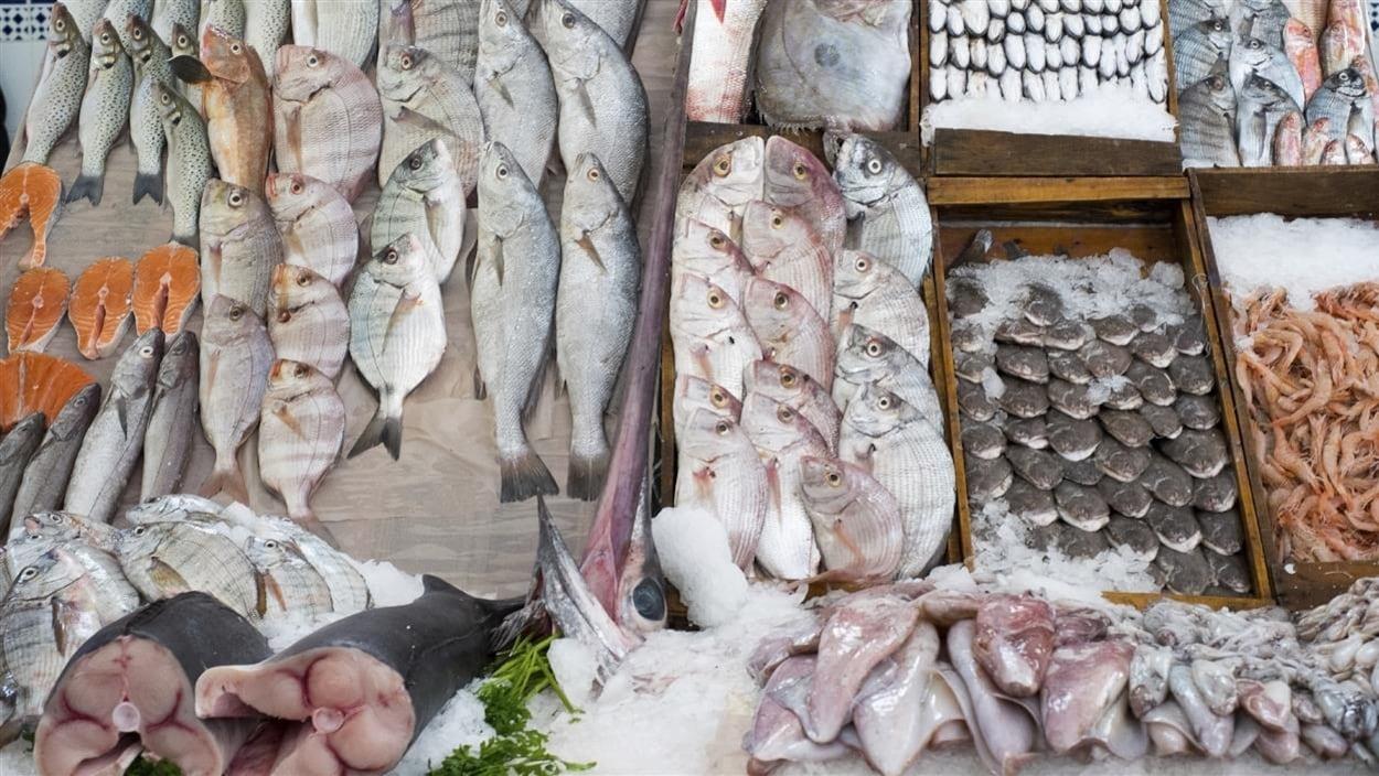 Un étalage de poissons et fruits de mer dans un marché