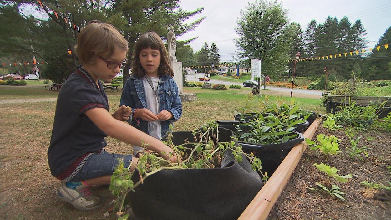 Des jardiniers en herbe de l'école alternative la Tortue-des-Bois de Saint-Mathieu-du-Parc s'occupent de leur potager.