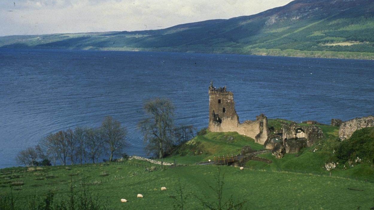 Un scientifique fera différents tests d'ADN dans le Loch Ness pour faire l'inventaire des espèces qui y vivent et peut-être résoudre l'énigme du monstre.