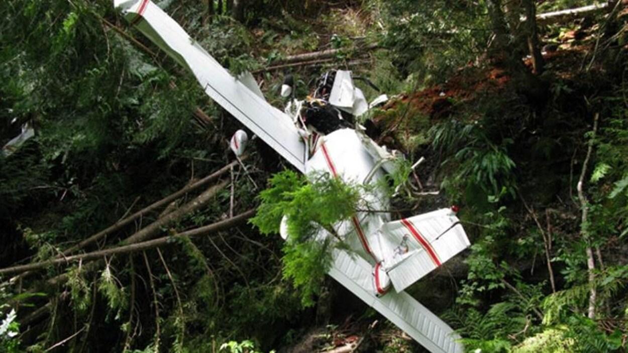 La carcasse d'un avion monomoteur à quatre places gît parmi des arbres.