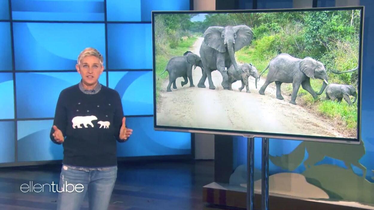 L'animatrice Ellen DeGeneres prenant la défense des éléphants menacés du Zimbabwe pendant l' Ellen DeGeneres Show