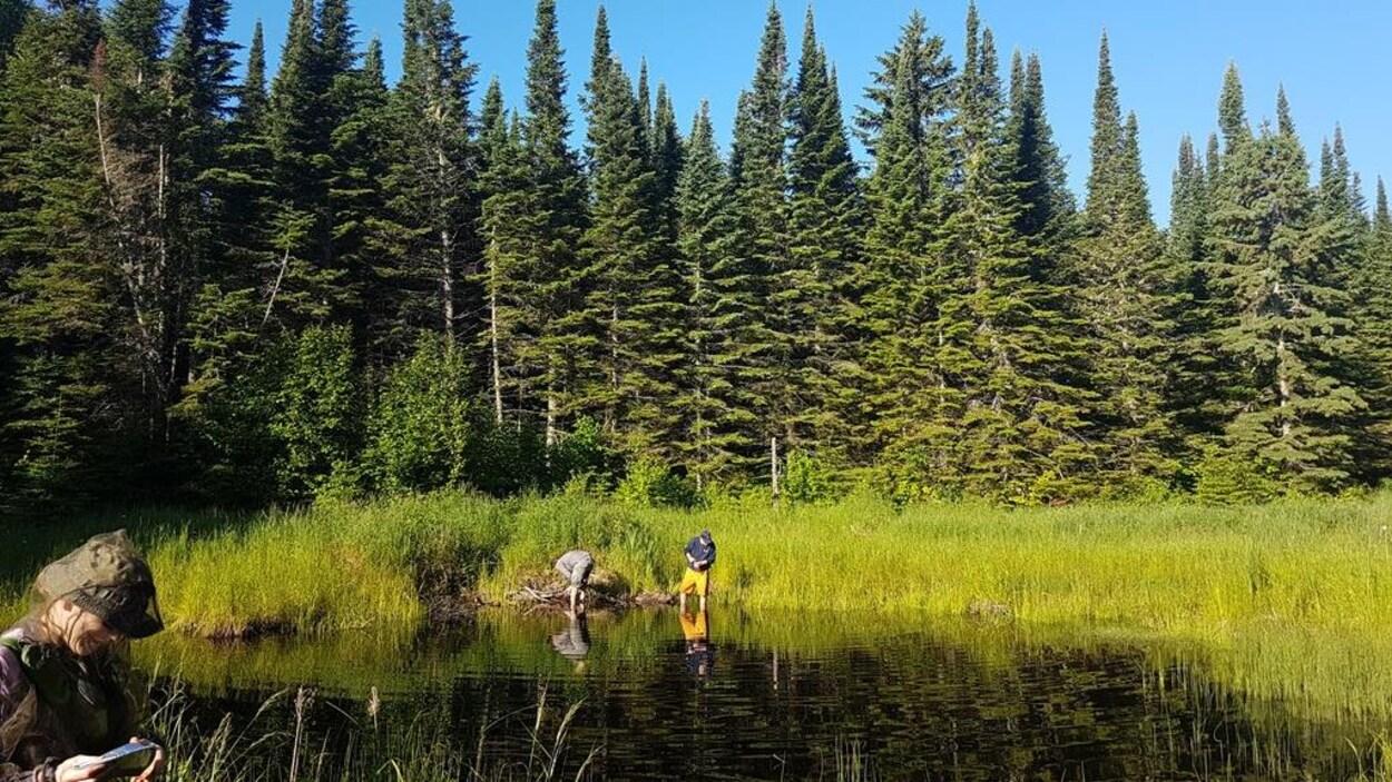 Étude d'un étang dans la réserve naturelle de Big Trout Bay.