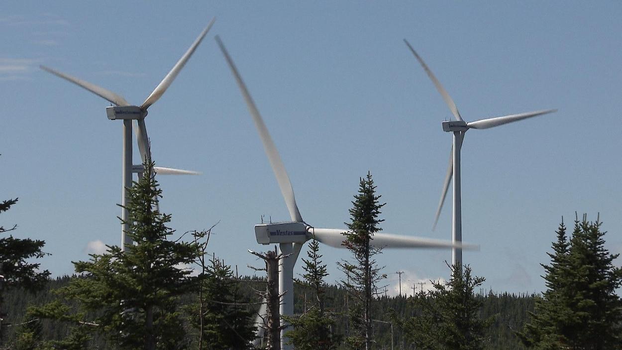 Trois éoliennes s'élèvent au-dessus de la cime des arbres dans un ciel bleu.