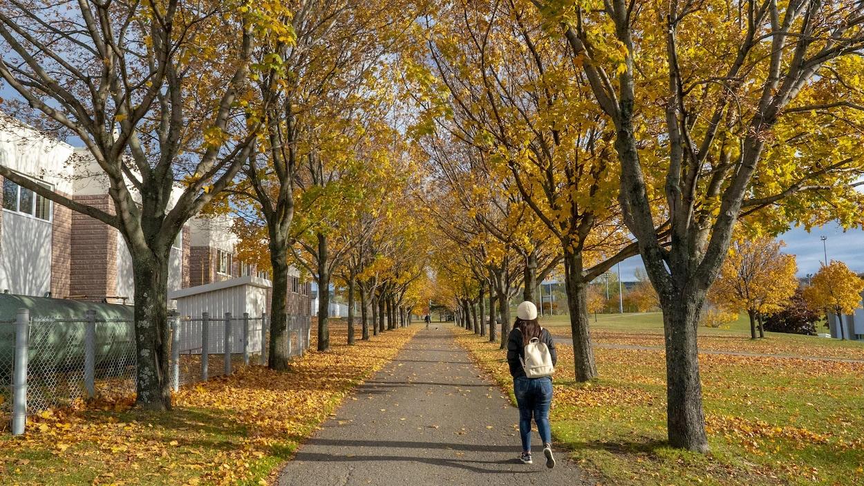 Une jeune femme marche dans une allée bordée d'érables, l'automne.