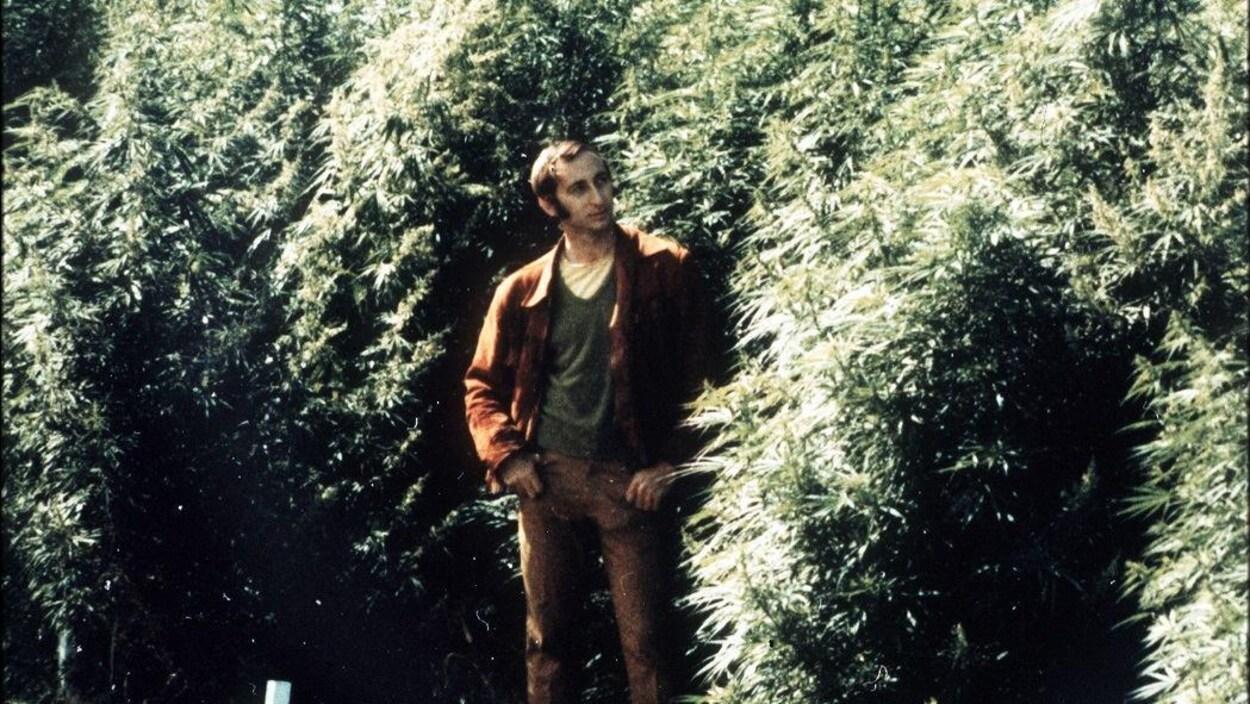 Un homme pose parmi de grands plants de cannabis touffus.