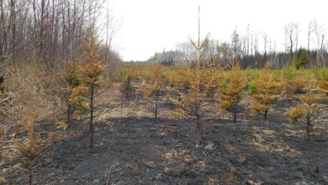 Un feu sur un terrain à Covehead qui a échappé au contrôle du propriétaire pour ensuite se propager à une zone boisée à proximité.